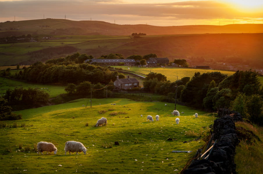 Sheep grazing in Peak District, England