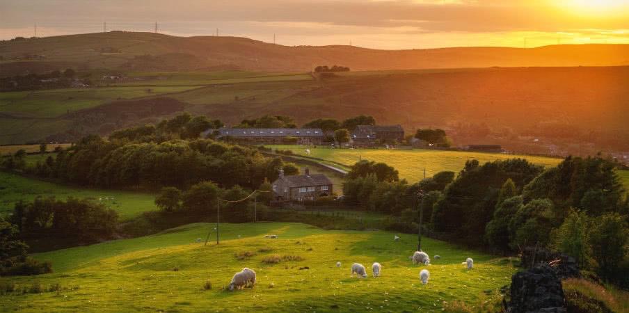 Sheep grazing in Peak District, England