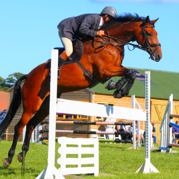 Show horse jumping in Pyecombe