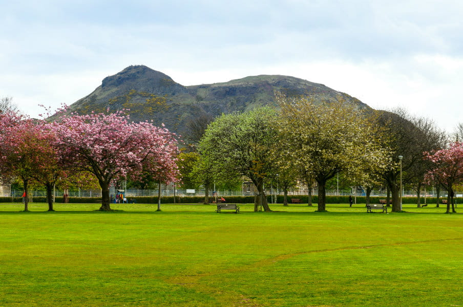 Spring in Meadows Park, Edinburgh