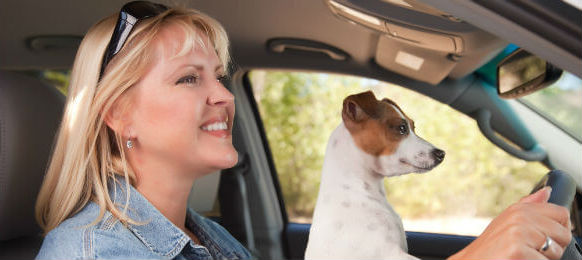 tourist traveling with her dog in a car hire